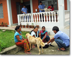 Community dogs brought to the Pokhara Centre for spaying
